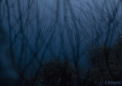 (justyourcofchi) Tags: blue trees lake abstract black reflection water model flickr photographer dusk moat elstead chiarnold justyourcupofchicom justyourcupofchi