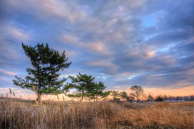 Blacks Creek Marsh sky and pines, Quincy MA
