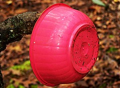 Pink Bowl (BACKYard Woods Explorer) Tags: trash woods plasticbowl pinkbowl october2011 kodakeasysharezd710zoom