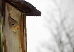 Baby Squirrel (Sami-Photos) Tags: baby nature animal squirrel sweet