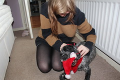Festive. (SophieWright<3) Tags: santa christmas dog cute hat scarf playful