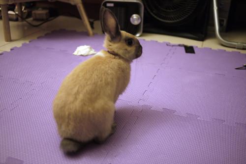 兔-NANA_02