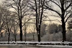 Wintry Blanket (KAM918) Tags: trees winter snow weather sunrise ma nikon massachusetts snowfall dracut d3100