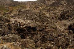 Kilimajaro - Machame Route day 3 (inaina10) Tags: africa stella plants kilimanjaro fauna trekking tanzania tents flora rocks hiking mount glaciers uhuru camps porters machameroute