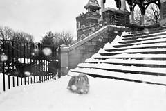 belvedere castle (Charley Lhasa) Tags: city nyc newyorkcity urban dog snow ny newyork film 35mm centralpark manhattan snowstorm scan snowfall charley belvederecastle volvox lhasaapso nikonos lti 28mmf28 nikonosv grayscaleconversion charleylhasa tumblr revolog software:adobe=lightroom file:original=jpeg lwnikkor2828 lwnikkor28mmf28 lw28 lens:nikkor=lw2828 digitalminilab camera:nikon=nikonosv xmscd12 roll:number=v0004 folder:name=6475 image:number=647516 date:uploaded=120126180353 revologvolvox200 set:name=lti325409 lti:scan=325409 set:name=v0004 xmscd12v