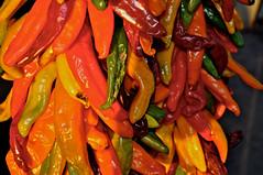 Taste The Rainbow (Rukasu1) Tags: chile newmexico pepper nikon chili hatch 1855mm nm nikkor ristra d5000 nikond5000