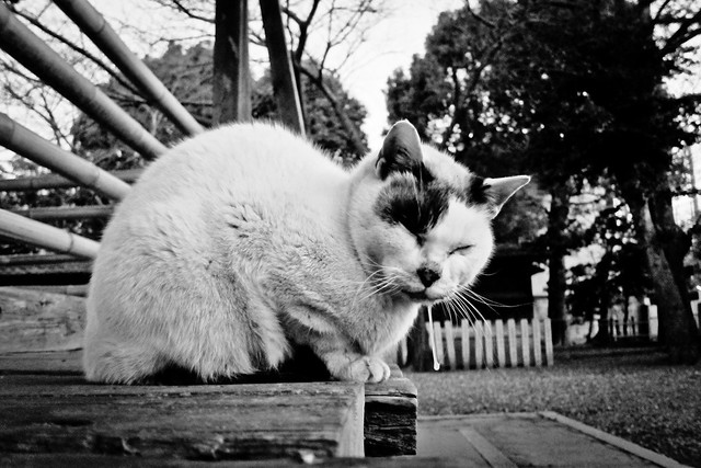 Today's Cat@2012-01-31
