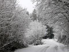 Une journée de neige (Seix/Ariège/Pyrénées) (PierreG_09) Tags: route neige arbre pyrénées piste pirineos ariège seix couserans