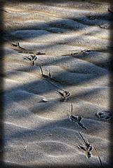 Orme (celestino2011) Tags: nuvole fiume bn ombre neve po riflessi orme sabbia