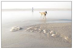 Hovering on a frozen sea (leo.roos) Tags: winter dog ice beach monster strand coast frozen pond minolta bevroren shoreline hond westland hover ijs zuidholland a900 darosa sandengine minolta3514 sandmotor zandmotor leoroos