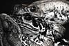 (Junior AmoJr) Tags: street color art sol arquitetura brasil photoshop canon sãopaulo chuva pb paisagem junior getty cor snapfish gettyimages lightroom t3i contributors atibaia photostock photostreet itsnoon gettyimagesandtheflickrcollection gettyimagesbrazil amojr junioramojr junioramojrcanonrepteiszooparkitatibaatibaiaspflikrawardstheauthorsplazadiscoveryphotosjunioramojrcanonmamiferoszooparkitatibaatibaiaspflikrawardstheauthorsplazadiscoveryphotos crowdart oliveirajunior riafestival