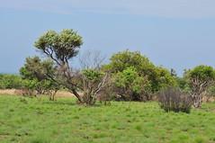 Game Reserve - Dikhololo (Bradclin Photography) Tags: wild game animal animals faces reserve behaviour dikoholo southafricagamebuckantelopezebragiraffenature