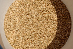 """Barley Seed, Ready to Plant <a style=""""margin-left:10px; font-size:0.8em;"""" href=""""http://www.flickr.com/photos/91915217@N00/13943612534/"""" target=""""_blank"""">@flickr</a>"""
