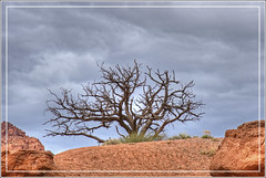 Threatening Storm (Explored May 7, 2016) (Runemaker) Tags: sky storm tree weather clouds landscape utah sandstone hiking capitolreefnationalpark chimneyrocktrail