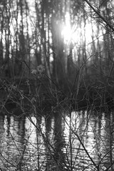 Woodland (Neil Savage Photography) Tags: sunlight reflection nature forest woodland reflections sticks woods natural bokeh twigs