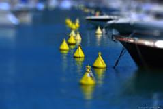 A slalom in yellow (natale.riili) Tags: lerici