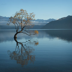 quiet multiplied (birdcloud1) Tags: newzealand lake tree willow otago wanaka lakewanaka canon50mm18 50mmlens butnotlonely southernlakes 50mm18lens 400d canoneos400d newzealandlandscapes amandakeogh amandakeoghphotography birdcloud1 willowtreewanaka lonetreewanaka