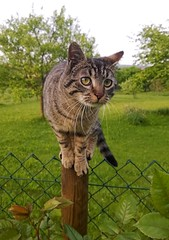 kimiko (maramillo) Tags: cat fence serious otr pensive storybook gatto cy yourock tcf unanimous maramillo