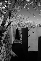 Holocaust Denkmal (hdejong57) Tags: berlin unterdenlinden reichstag potsdamerplatz sonycenter brandenburgertor siegessule sightseeings kpenick kaiserwilhelmgedchtniskirche bundeskanzleramt holocaustdenkmal citytrip themauer