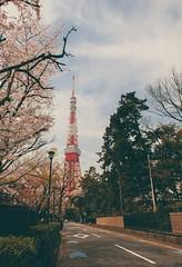 Tokyo Tower (EHaliM) Tags: travel holiday travelling tower japan tokyo sakura tokyotower fujifilm xt1 fujifilmxt1
