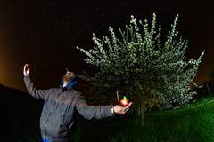 light tree art apple night germany stars deutschland... (Photo: MAGIC PASSION * PHOTOGRAPHY * on Flickr)