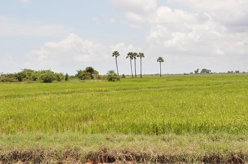lac tonle sap - cambodge 2014 4