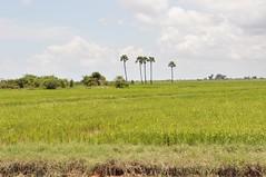 lac tonle sap - cambodge 2014 4 (La-Thailande-et-l-Asie) Tags: cambodge lac tonlsap