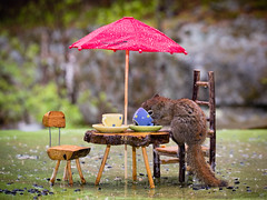 Her lunch companion cancelled due to the rain but she didn't get the text. (Nancy Rose) Tags: umbrella table lunch squirrel chairs dishes raining cupandsaucer