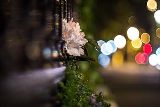 Sreet flower bokeh