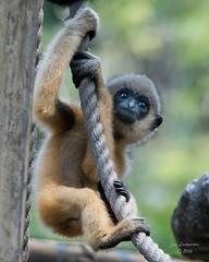 Monkey-1 (jimlustgarten) Tags: monkey lustgarten