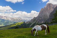 Piz Uridl (Almost) (Hemsedl) Tags: italy horse italia hiking dolomites hest canazei fjelltur valdifassa sassolungo dolomittene