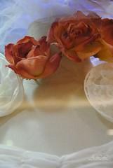 Para Marilyn Belmonte (-Ana Lía-) Tags: fotografía arte femme mulher woman mujer frau donna женщина mardelplata argentina aprehendiz estrella vidriera