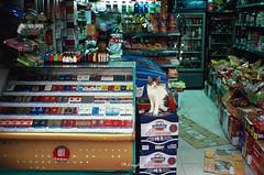 Kodak_E100VS_4-16 (Onni / Xijia Cao) Tags: china summer woman film beer cat store downtown shanghai kodak chinese contax kiosk kodake100vs citycenter contaxt2 sonnar carlzeiss cigeratte colorpositive carlzeisssonnart38mmf28 gettychinaq2