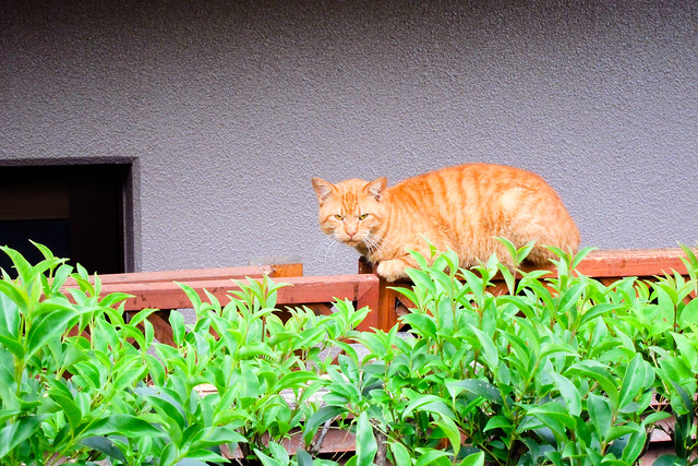 Today's Cat@2011-12-03