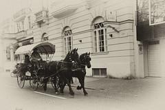 Carrozze a Bolzano... (IL_Razza) Tags: carrozza natale alto cavalli trentino bolzano bozen seppia adige mercatini