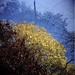 Autumn 2011: Tricolour