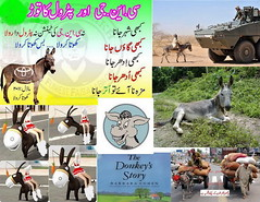 Zoos and Wildlife Breeding Centers of Pakistan (sirda) Tags: china road birthday park christmas city girls pakistan portrait hot sexy beautiful car yellow mall garden tin caw photography zoo monkey canal 3d fight friend shoes kiss funny boobs photos map top president butt donkey goat banana powder camel age gmail mango sing dk bmw kashmir khan sikh manager hotmail anti panther ahmed bagh loin lahore imran insurance asif shahid 2012 shah facebook mela pathan saeed prade acca khalil azad 2011 efu zardari