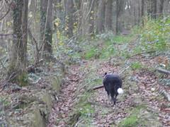 WTN just follow ...... (Rusty Marvin - JohnWoracker.com) Tags: trees collie path stick dec04 navigation scdec scdec04