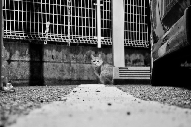 Today's Cat@2011-12-08