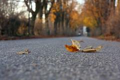 Goodbye (Lookaloopy) Tags: fall leaves canon eos strada inverno autunno visconti viale grazzano 450d canonianiit