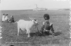 One Man and his, er, Goat (National Library of Ireland on The Commons) Tags: ireland pet white animal children army uniform factory cork horns goat mascot fields soldiers leash busby munster fermoy crests chinstrap 1890s 1897 royalwelshfusiliers robertfrench williamlawrence royalwelchfusiliers nationallibraryofireland regimentalmascot lawrencecollection