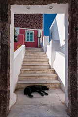 Too hot for the dog (jeff_006) Tags: door sleeping dog chien stairs island greek santorini greece porte framing dormir santorin grce escalier cadre le 918 gh1 grcque