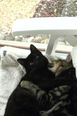 Afraid by the hurricane, close together (Elysium 2010) Tags: love kitten hurricane afraid comforting