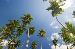Palm trees, La Digue, Seychelles (LimeWave Photo) Tags: ocean africa travel trees sky tree beach paradise indianocean boulder palm granite afrika romantic seychelles source ladigue anse dargent ansesourcedargent limewave veuvenaturereserve indiskaoceanien