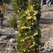 360_Trees_2011_132