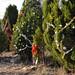 360_Trees_2011_159