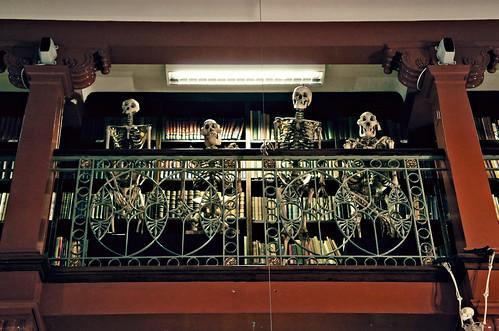 Skeletal onlookers (closeup)