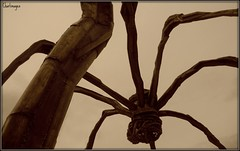 El terror. (CHARLIMAGEN) Tags: spider bilbao escultura guggenheim nublado bicho monstruo bestia titanio viajeacastroybilbao madrearaadelguggenheim