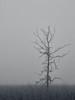 Solitary (bill.d) Tags: park winter blackandwhite bw tree fog day michigan unitedstatesofamerica overcast kalamazoo preserve wmu kalamazoocounty asylumlake a590is topazinfocus topazblackwhiteeffects