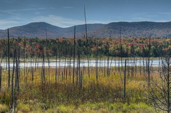 Adirondack III (Daniel J. Mueller) Tags: park new york trees summer mountain lake tree dead pond state forrest indian upstate foilage adirondack mygearandme mygearandmepremium